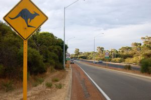 Kangaroo crossing road sign in Perth, Australia
